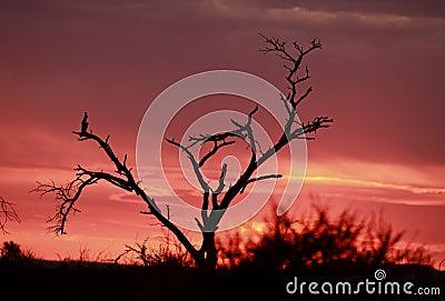 Pink African sunrise