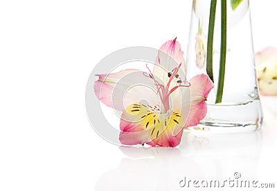 Pink alstromeriya near a vase