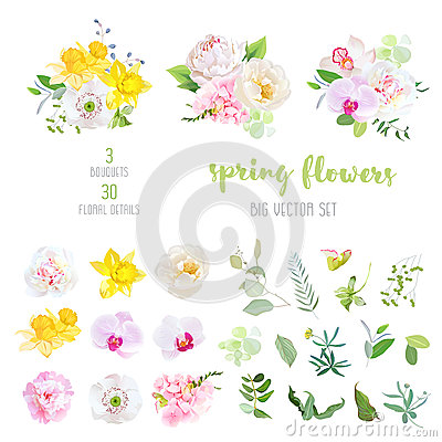 Free Pink And White Peony, Yellow Daffodils, Wild Rose, White Poppy, Stock Images - 90618804