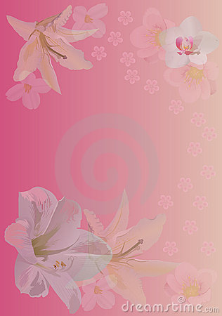Pink background with lily and orchid flowers