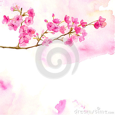 Free Pink Background With Watercolor Branch Of Cherry Royalty Free Stock Images - 52739959