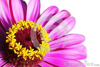 Pink beautiful flower closeup