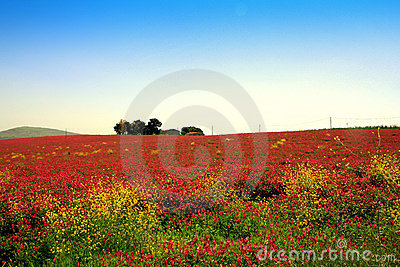 Pink blooming flowers, country landscape