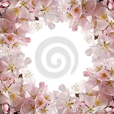 Pink blossom frame