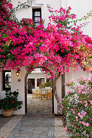 Free Pink Bougainvillea  Royalty Free Stock Image - 22602696