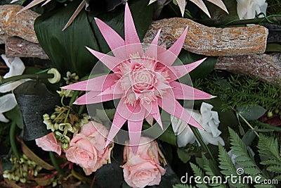 Pink bromelia in a flower arrangement
