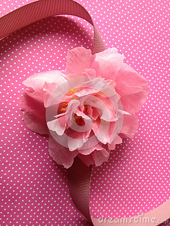 Pink camellia on polka dots with ribbon