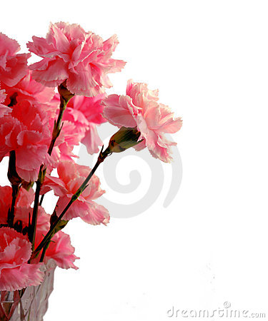 Free Pink Carnations Royalty Free Stock Photo - 9545925