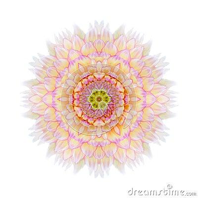 Free Pink Concentric Chrysanthemum Mandala Flower Isolated Royalty Free Stock Photo - 45976615