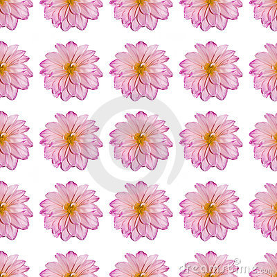 Pink dahlia flower in a repeated pattern