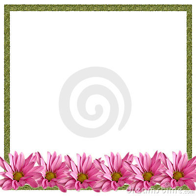 Pink Daisies Border on White