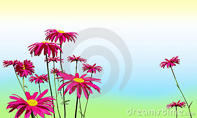 Pink daisy flowers on pastel colors