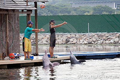 Pink Dolphin show in Sentosa Island, Singapore Editorial Stock Image