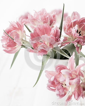 Free Pink Double Peony Tulip Royalty Free Stock Photography - 52633177