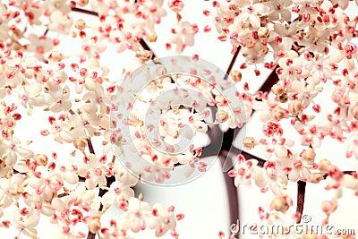 pink elder flowers