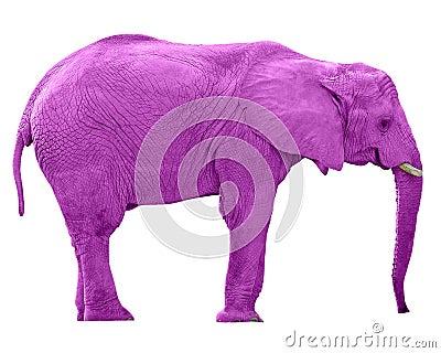 Pink Elephant w/Paths