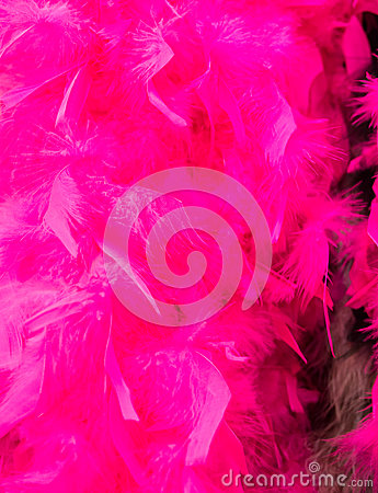 Pink Feathered Background