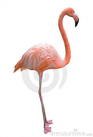 Free Pink Flamingo. Stock Image - 3331361