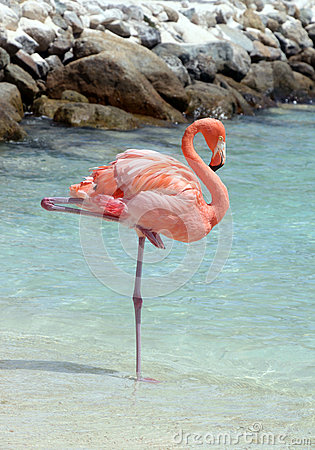 Free Pink Flamingo Royalty Free Stock Image - 43878136