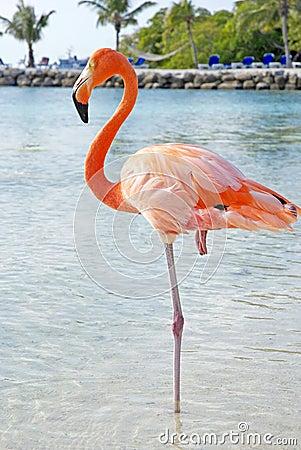 Free Pink Flamingo Stock Photos - 45983683