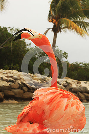 Free Pink Flamingo Royalty Free Stock Image - 56295986