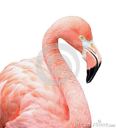 Free Pink Flamingo Bird Royalty Free Stock Images - 6733819