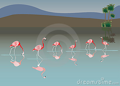 Pink flamingo in lake