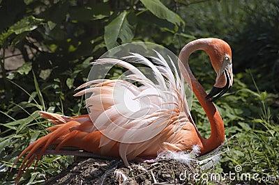 Flamingo Nests Pink Flamingo Sitting ...