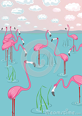 Pink flamingos on the bay