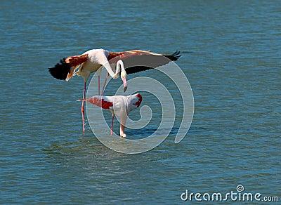 Pink flamingos matting
