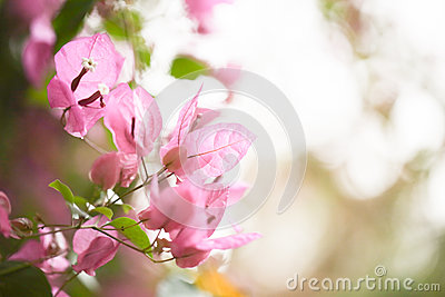 Pink floral background for your design