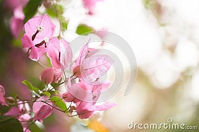 Pink floral background for your design