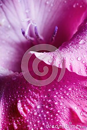 Free Pink Flower Stock Photo - 4069020