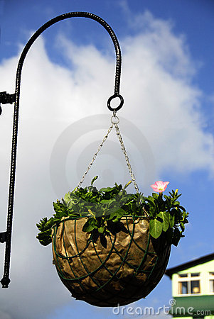 Pink flower basket on the street