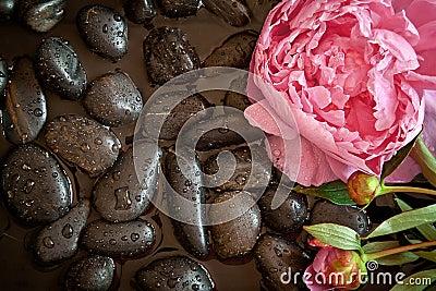Pink flower on black pebbles