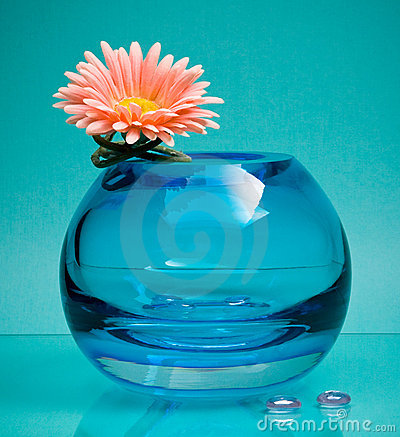 Pink flower and round glass vase on blue
