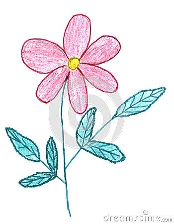 Pink flower sketch