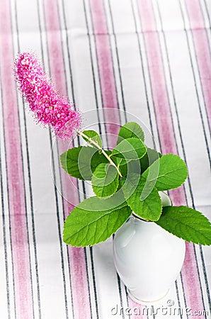 pink flower in a vase