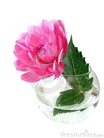 Pink Flower In Vase Royalty Free Stock Images - Image: 3512969