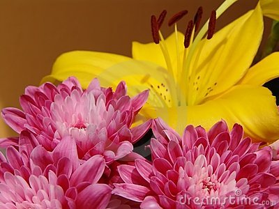 Pink Flower - Yellow background