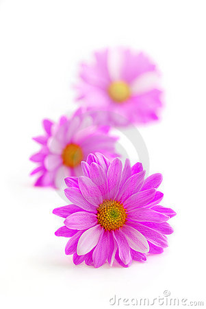 Free Pink Flowers Stock Images - 1939224