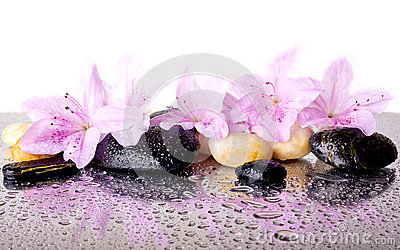 Pink flowers and black stones