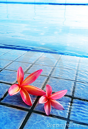 Pink flowers by blue pool, tropical resort hotel