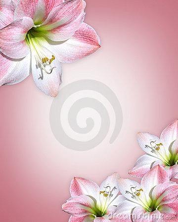 Free Pink Flowers Border Amaryllis  Royalty Free Stock Photos - 7806628