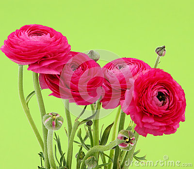Pink flowers with green background