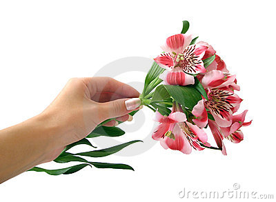 Pink flowers on hand