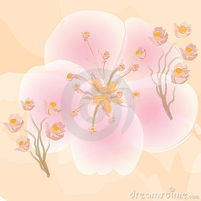Pink flowers on orange watercolour background