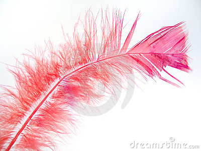 Pink för 2 fjäder