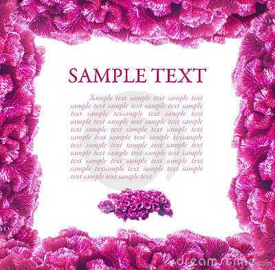 Free Pink Frame Of Flowers Celosia Stock Image - 6634841