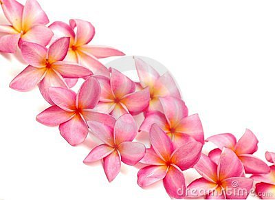 Pink Frangipani For Border Royalty Free Stock Photos ...